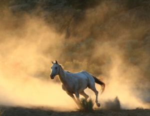 Did You Lose Your Horse Today? - Official Site Dan Miller